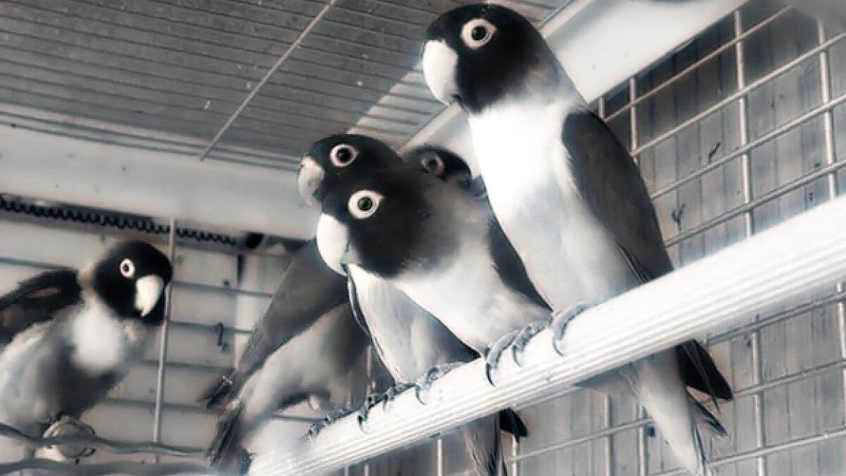 Этот род попугаев поднимет ваш маркетинг на новый уровень